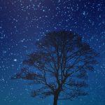真冬の星が一段と綺麗に見える理由3つと真冬と冬日の違いをご紹介!