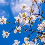 花曇りの意味とは?曇りの使い分けとは?風情ある春の季語5選もご紹介します