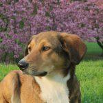 飼い犬は霊が見えていると感じた実体験と犬の不思議な能力3選についてご紹介します