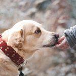 腸閉塞になった飼い犬の初期症状と原因 管理入院までの記録まとめ